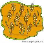 Getreide clipart