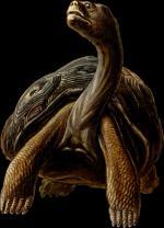Giant Tortoise clipart