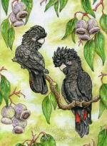 Glossy Black Cockatoo svg