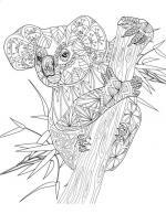 Golden Wattle coloring