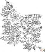 Grandiflora coloring