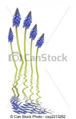 Grape Hyacinth clipart