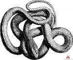 Grass Snake clipart