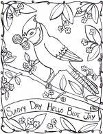 Gray Jay coloring
