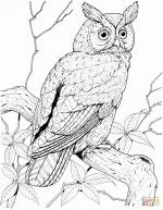 Great Grey Owl coloring