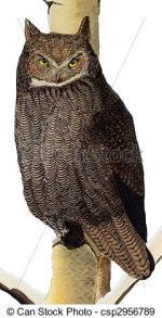 Horned Owl clipart