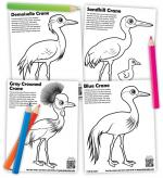 Red-crowned Crane coloring
