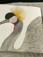 Grey Crowned Crane coloring