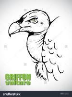 Griffon Vulture clipart