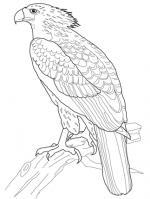 Phillipine Eagle clipart