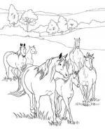 Herd coloring