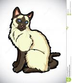 Himalayan Cat clipart