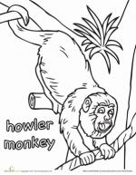 Howler Monkey coloring