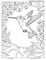 Hummingbird coloring