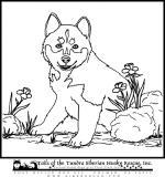 Husky coloring