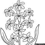Hyacinth coloring