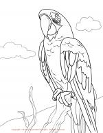 Red-and-green Macaw coloring