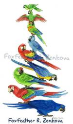 Scarlet Macaw svg