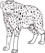 Hyena coloring