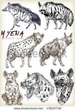 Hyena svg