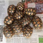 Indian Star Tortoise coloring