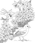 Snow Bunting coloring