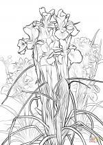 Iris coloring