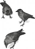 Jackdaw clipart
