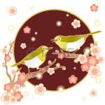 Japanese White-eye clipart
