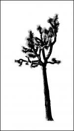 Joshua Tree clipart