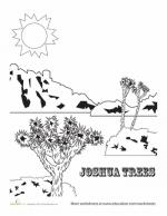 Joshua Tree coloring