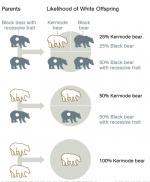 Kermode Bear svg