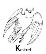 Kestrel coloring