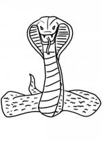 King Cobra coloring