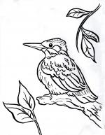 Kingfisher coloring