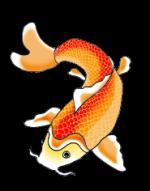 Koi Fish clipart
