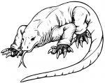 Komodo Dragon clipart