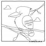 Kookaburra coloring