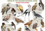 Kruger National Park clipart
