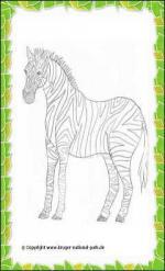 Kruger National Park coloring