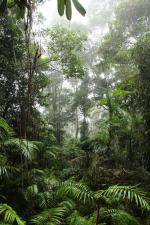Kuranda Rianforest svg