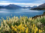 Wakatipu Lake svg