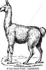 Lama clipart