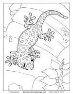 Tokay Gecko coloring