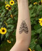 Leopard Moth coloring