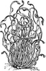 Lichen clipart