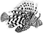 Lionfish coloring