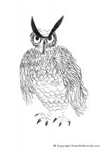 Long Eared Owl coloring