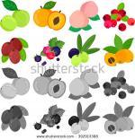 Loquat Berries clipart