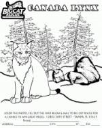 Lynx coloring